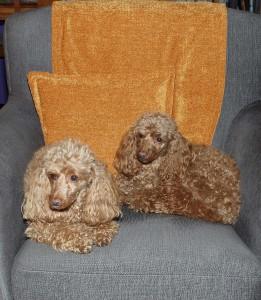 Edith (vas.) ja Doris toimivat välillä emäntänsä assistentteina.