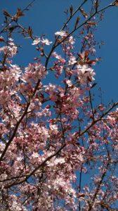 Kukkapuu